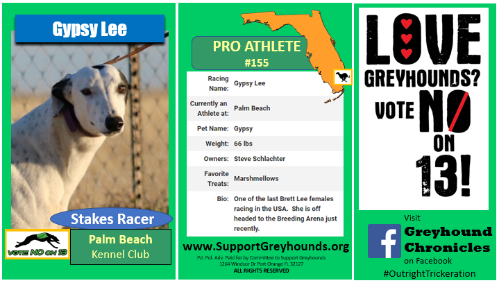 Committee to Support Greyhounds - Meet the Athletes